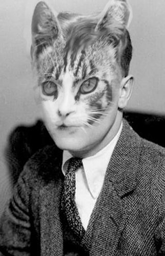 Celebrated cat and author, F. Cats Furtzgerald